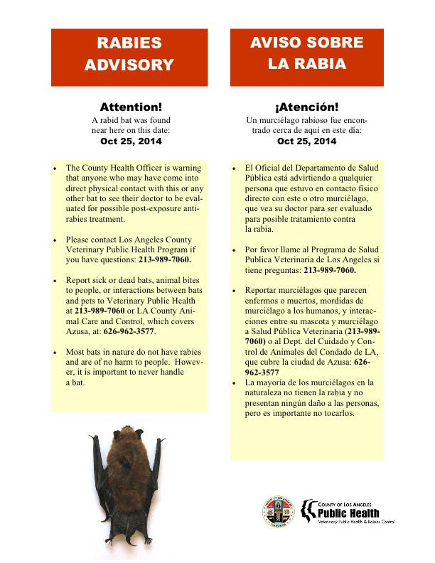 Rabid Bat Found In Azusa